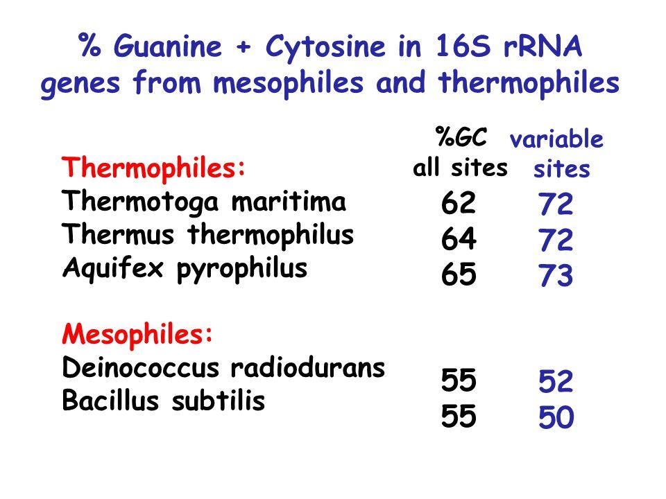 % Guanine + Cytosine in 16S rRNA genes from mesophiles and thermophiles Thermophiles: Thermotoga maritima Thermus thermophilus Aquifex pyrophilus Mesophiles: Deinococcus radiodurans Bacillus subtilis 62 64 65 55 %GC all sites 72 73 52 50 variable sites