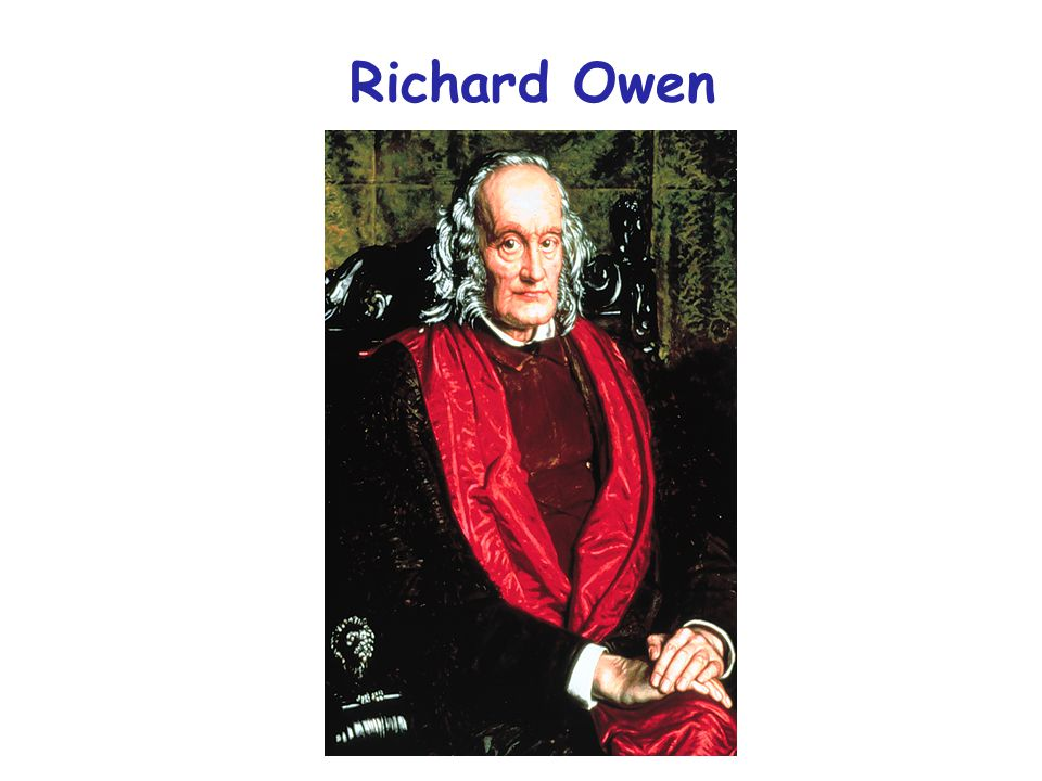 Homologue: the same organ under every variety of form and function (true or essential correspondence) Analogy: superficial or misleading similarity Richard Owen 1843 Owen's definition of homology
