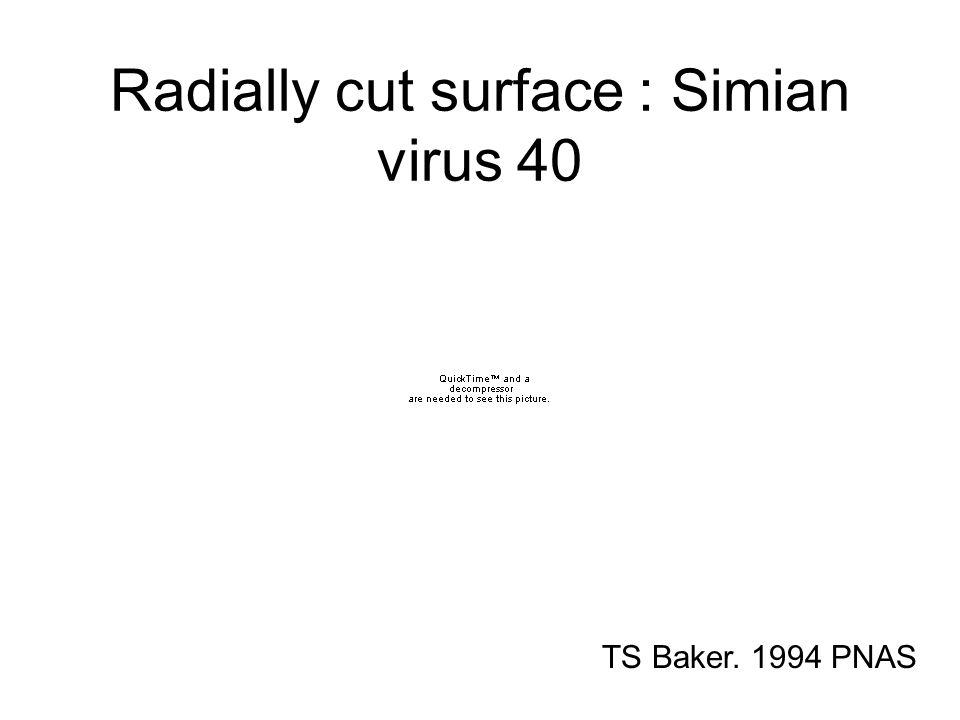 Radially cut surface : Simian virus 40 TS Baker. 1994 PNAS