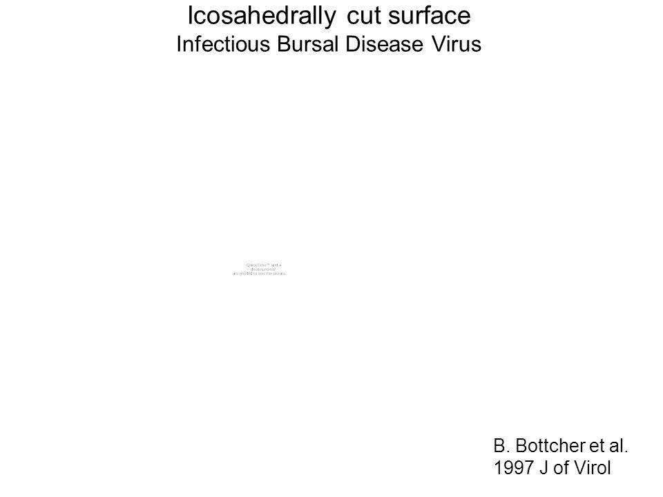 Icosahedrally cut surface Infectious Bursal Disease Virus B. Bottcher et al. 1997 J of Virol