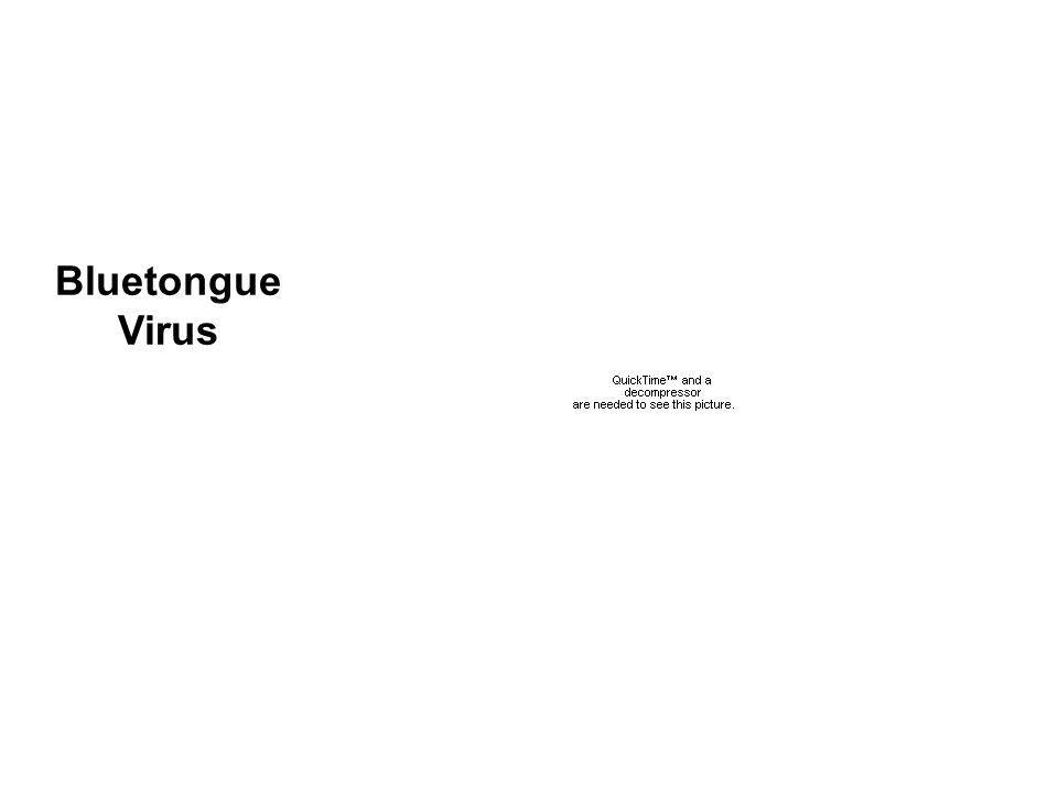 J.M.Grimes et al. 1997 Structure Bluetongue Virus
