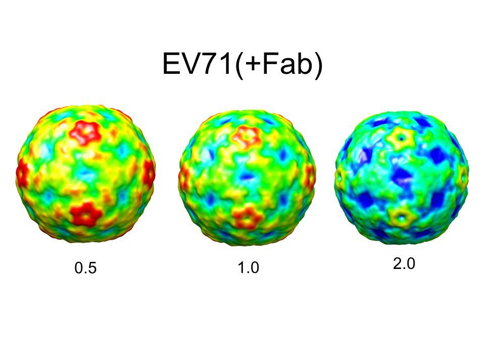 EV71(+Fab) 0.5 1.0 2.0