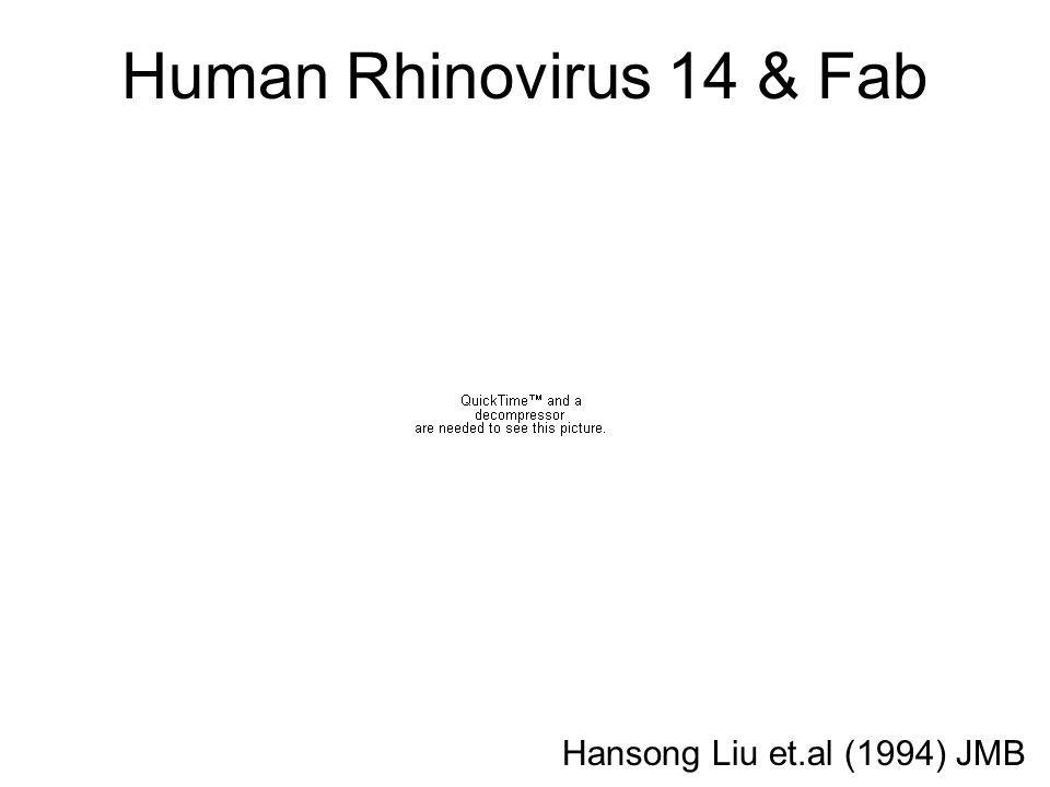 Human Rhinovirus 14 & Fab Hansong Liu et.al (1994) JMB