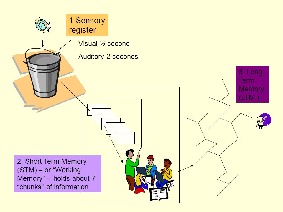 1.Sensory register Visual ½ second Auditory 2 seconds 3.