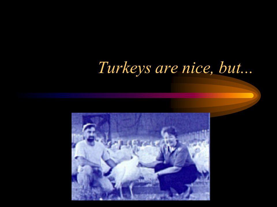 Turkeys are nice, but...