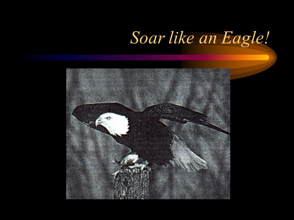 Soar like an Eagle!
