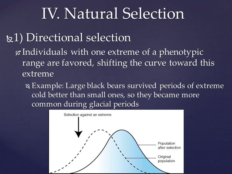  1) Directional selection  Individuals with one extreme of a phenotypic range are favored, shifting the curve toward this extreme  Example: Large black bears survived periods of extreme cold better than small ones, so they became more common during glacial periods IV.