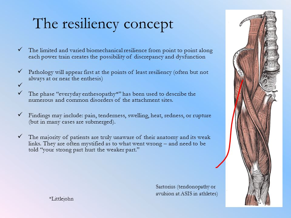 The resiliency concept The limited and varied biomechanical resilience from point to point along each power train creates the possibility of discrepancy and dysfunction Pathology will appear first at the points of least resiliency (often but not always at or near the enthesis) The phase everyday enthesopathy* has been used to describe the numerous and common disorders of the attachment sites.