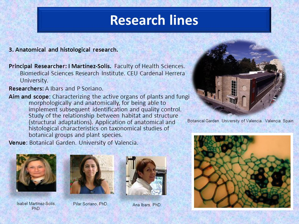 Research lines 3. Anatomical and histological research.