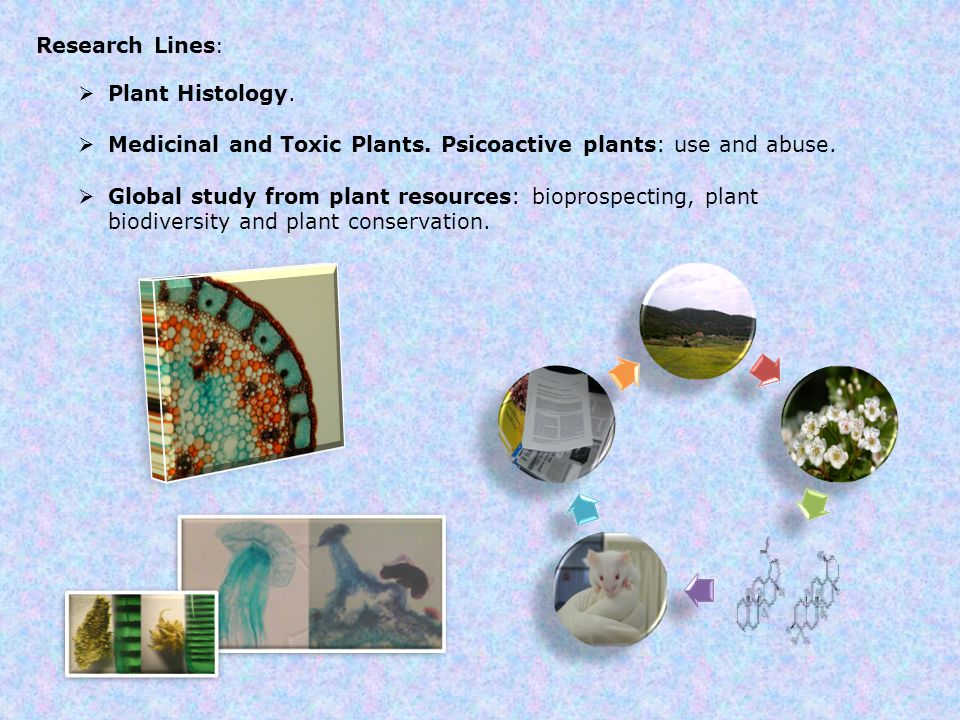 Research Lines :  Plant Histology.  Medicinal and Toxic Plants.