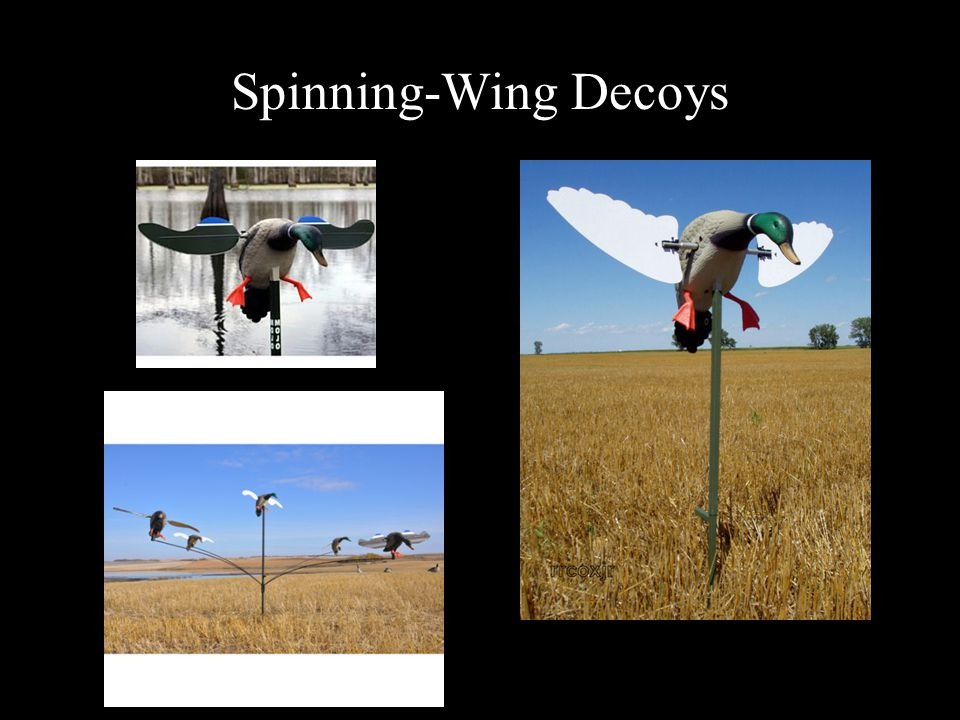 Spinning-Wing Decoys