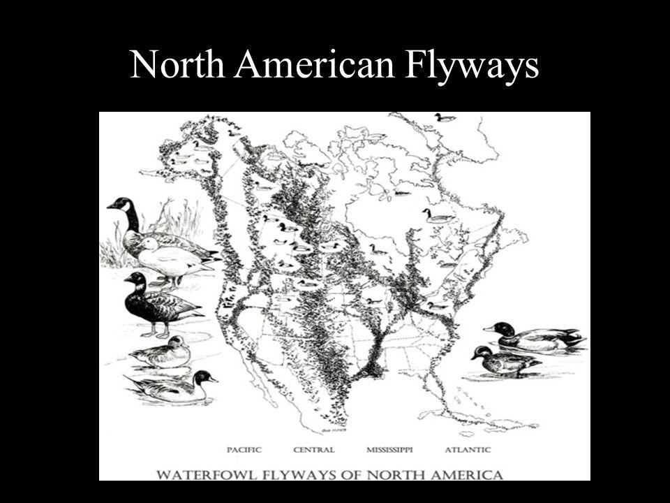 North American Flyways