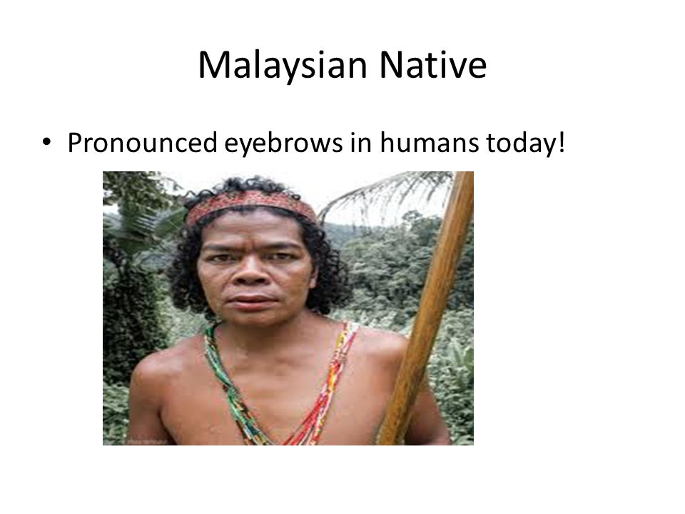 Malaysian Native Pronounced eyebrows in humans today!