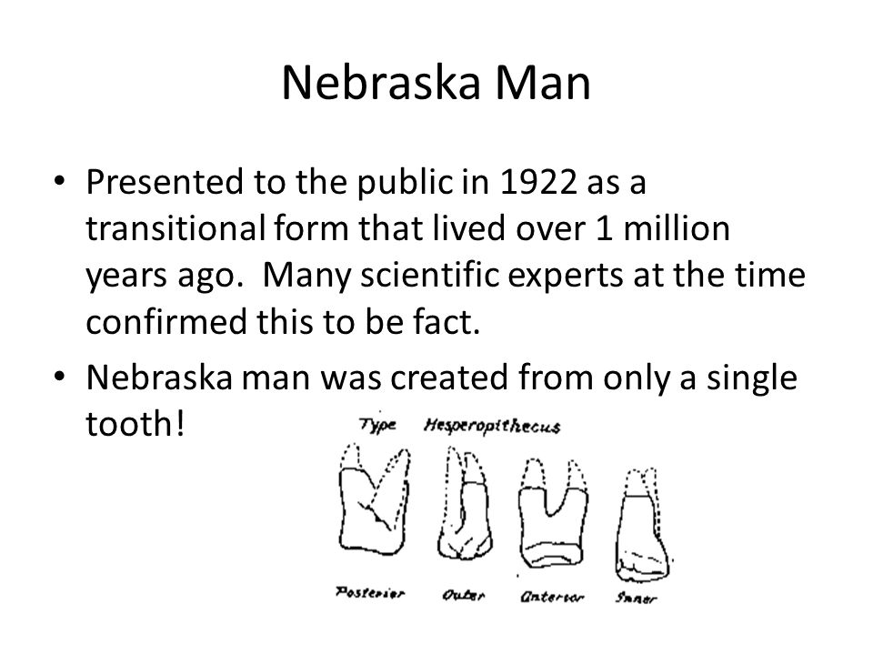 Nebraska Man Presented to the public in 1922 as a transitional form that lived over 1 million years ago. Many scientific experts at the time confirmed