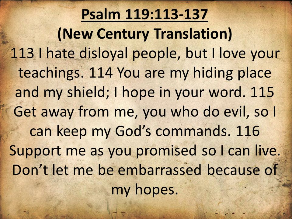 Psalm 119:113-137 (New Century Translation) 113 I hate disloyal people, but I love your teachings.
