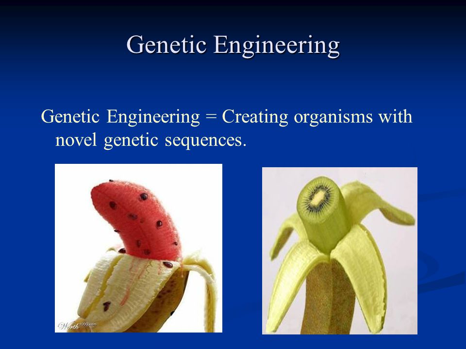 Genetic Engineering = Creating organisms with novel genetic sequences.