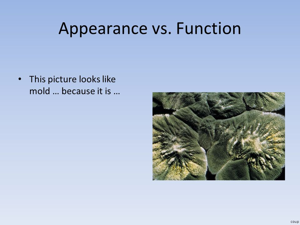 Appearance vs. Function This picture looks like mold … because it is … coup