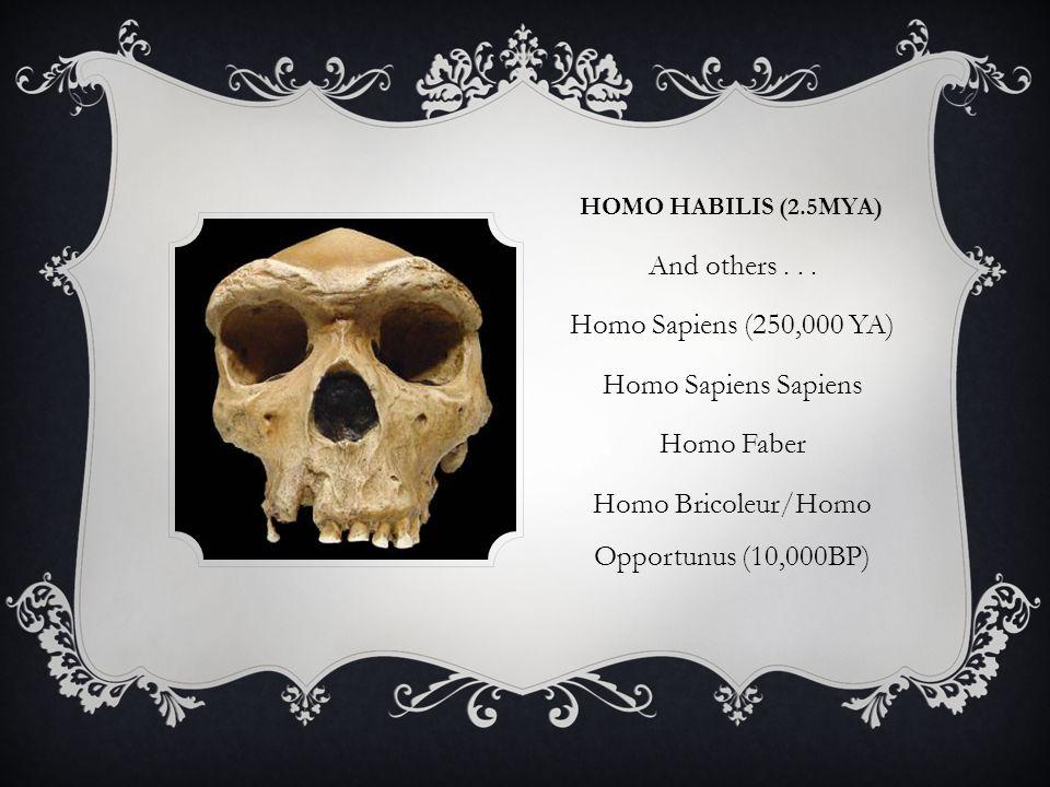 HOMO HABILIS (2.5MYA) And others...