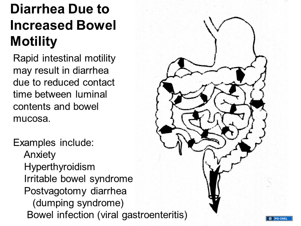 Rapid intestinal motility may result in diarrhea due to reduced contact time between luminal contents and bowel mucosa.