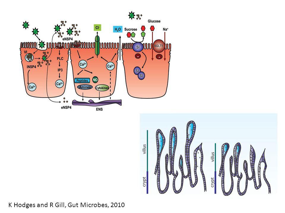 Stool electrolyte losses InfectionStool sodium Cholera88.9 mMol/L ETEC53.7 mMol/L Rotavirus37.2 mMol/L AM Molla et al.