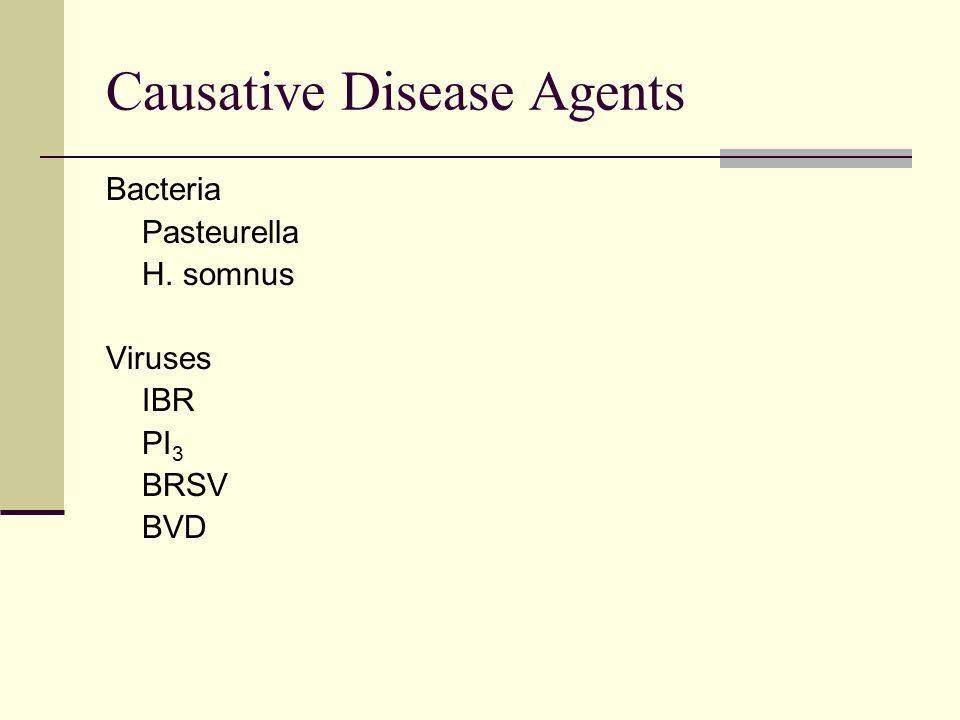 Causative Disease Agents Bacteria Pasteurella H. somnus Viruses IBR PI 3 BRSV BVD