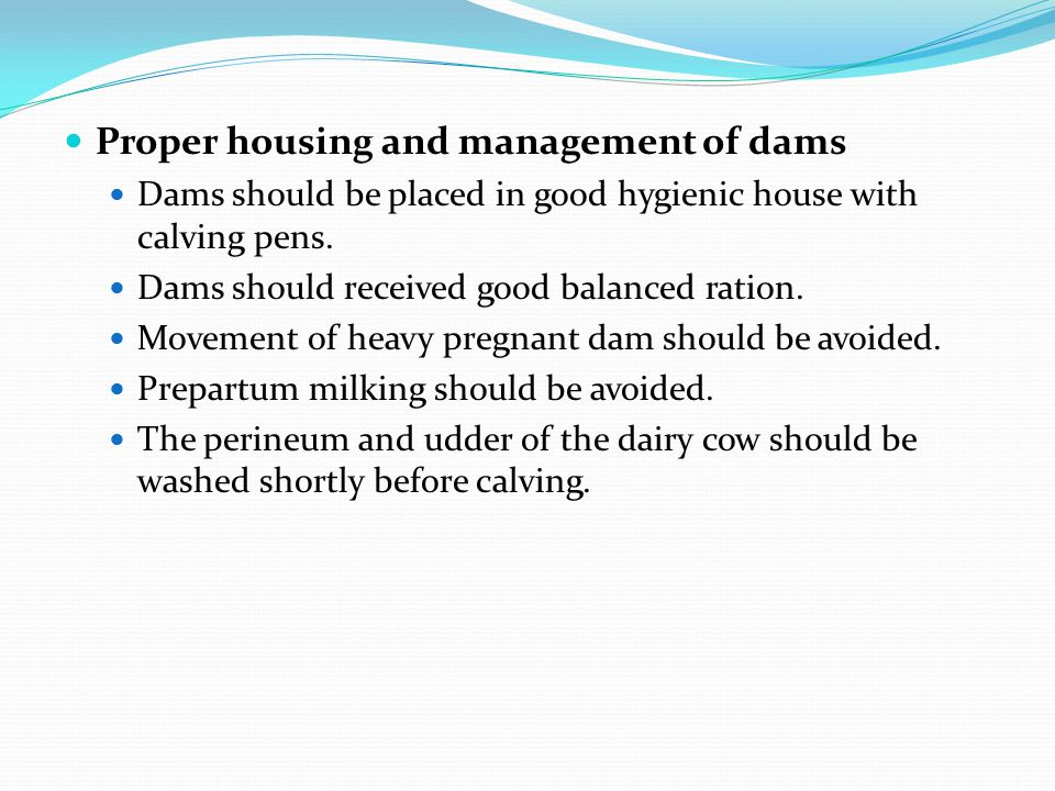 Proper housing and management of dams Dams should be placed in good hygienic house with calving pens. Dams should received good balanced ration. Movem