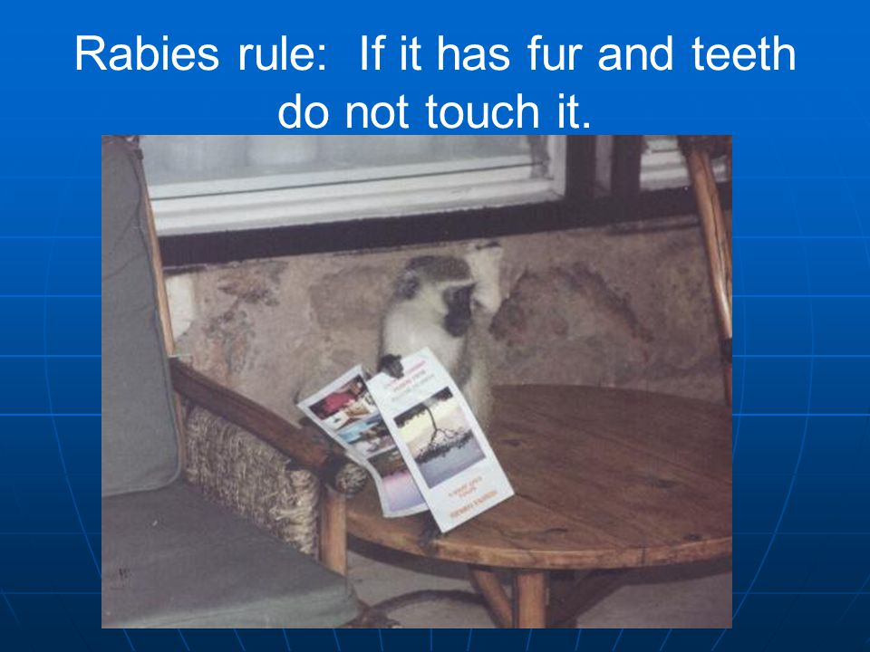Rabies rule: If it has fur and teeth do not touch it.