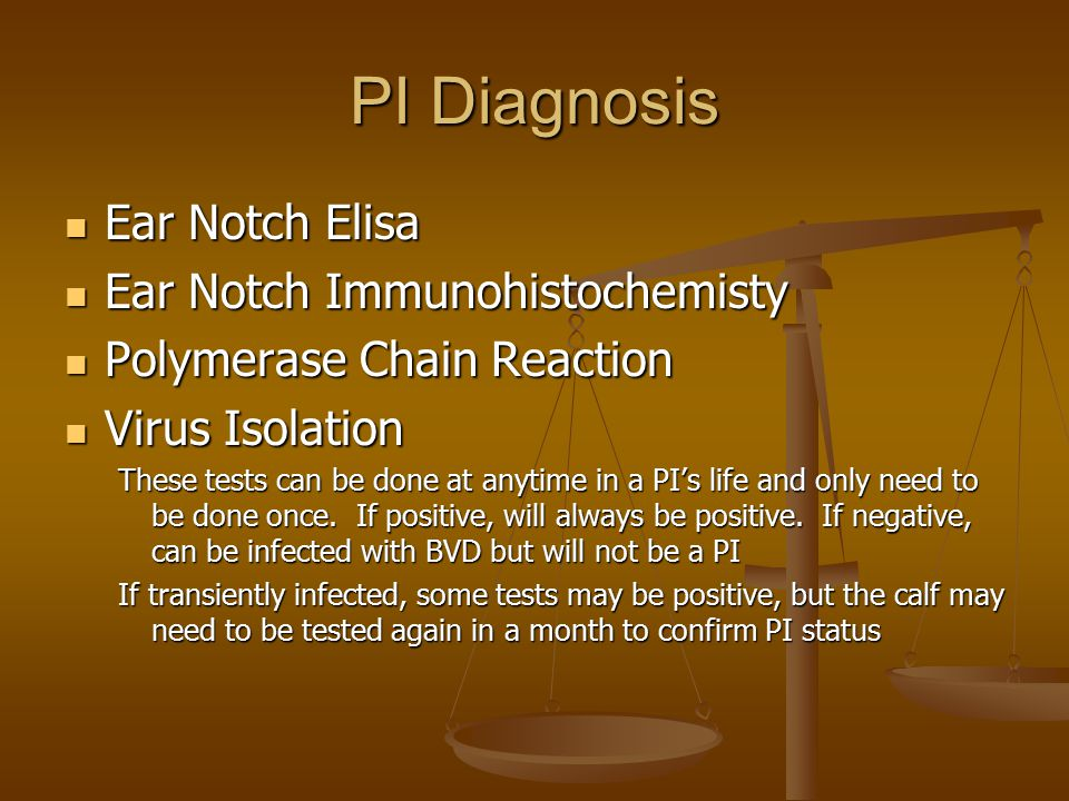 PI Diagnosis Ear Notch Elisa Ear Notch Elisa Ear Notch Immunohistochemisty Ear Notch Immunohistochemisty Polymerase Chain Reaction Polymerase Chain Re