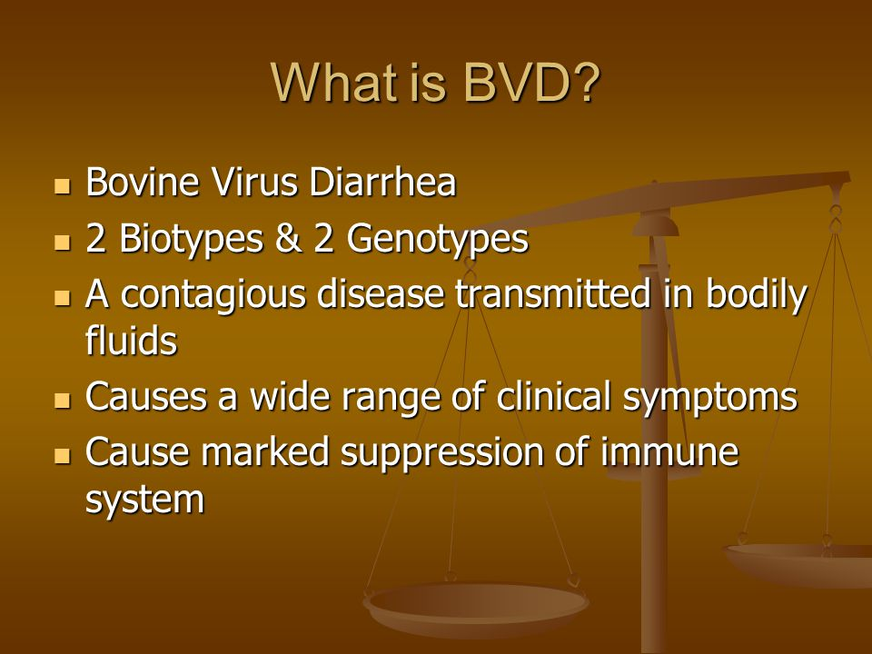 What is BVD? Bovine Virus Diarrhea Bovine Virus Diarrhea 2 Biotypes & 2 Genotypes 2 Biotypes & 2 Genotypes A contagious disease transmitted in bodily
