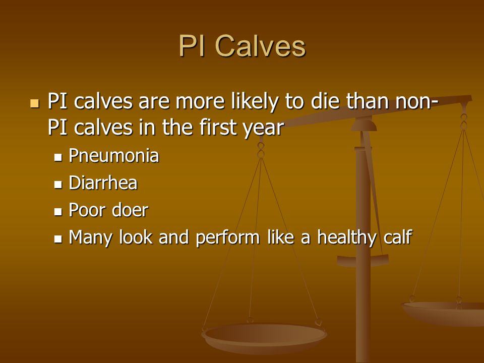 PI Calves PI calves are more likely to die than non- PI calves in the first year PI calves are more likely to die than non- PI calves in the first yea