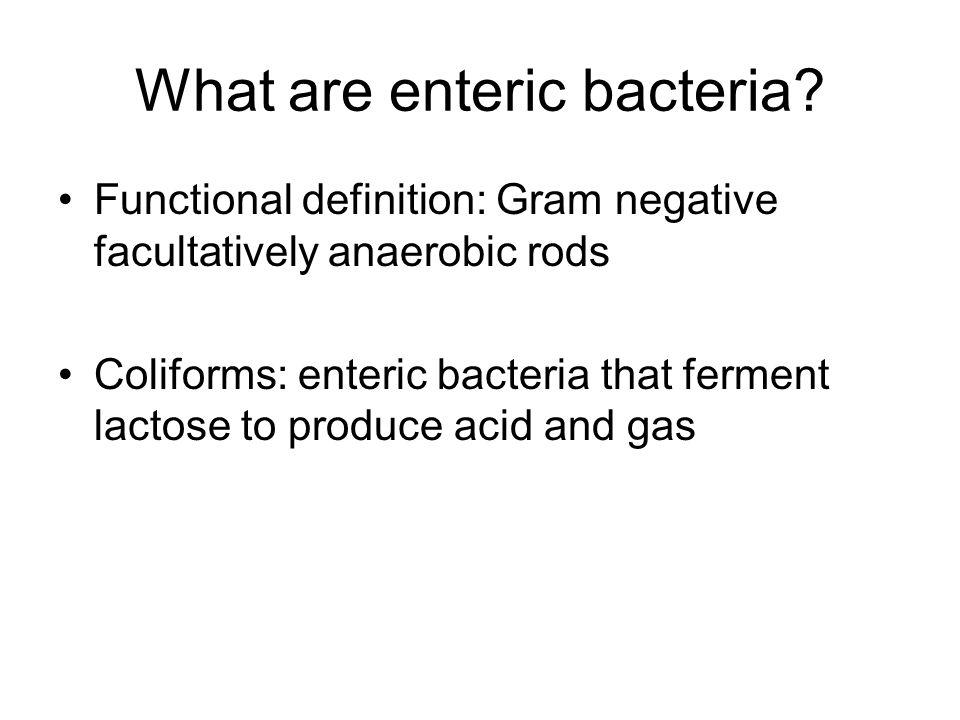 What do gram negative bacteria look like.