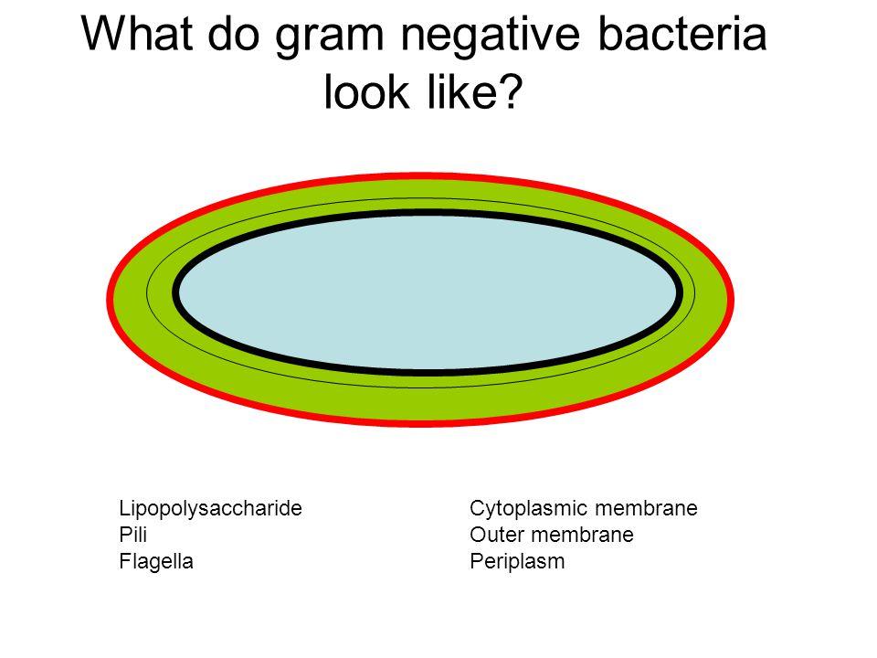 Enteric Bacteria Enteric bacteria: secretory or watery diarrhea Vibrio cholerae ETECs (Enterotoxigenic E.