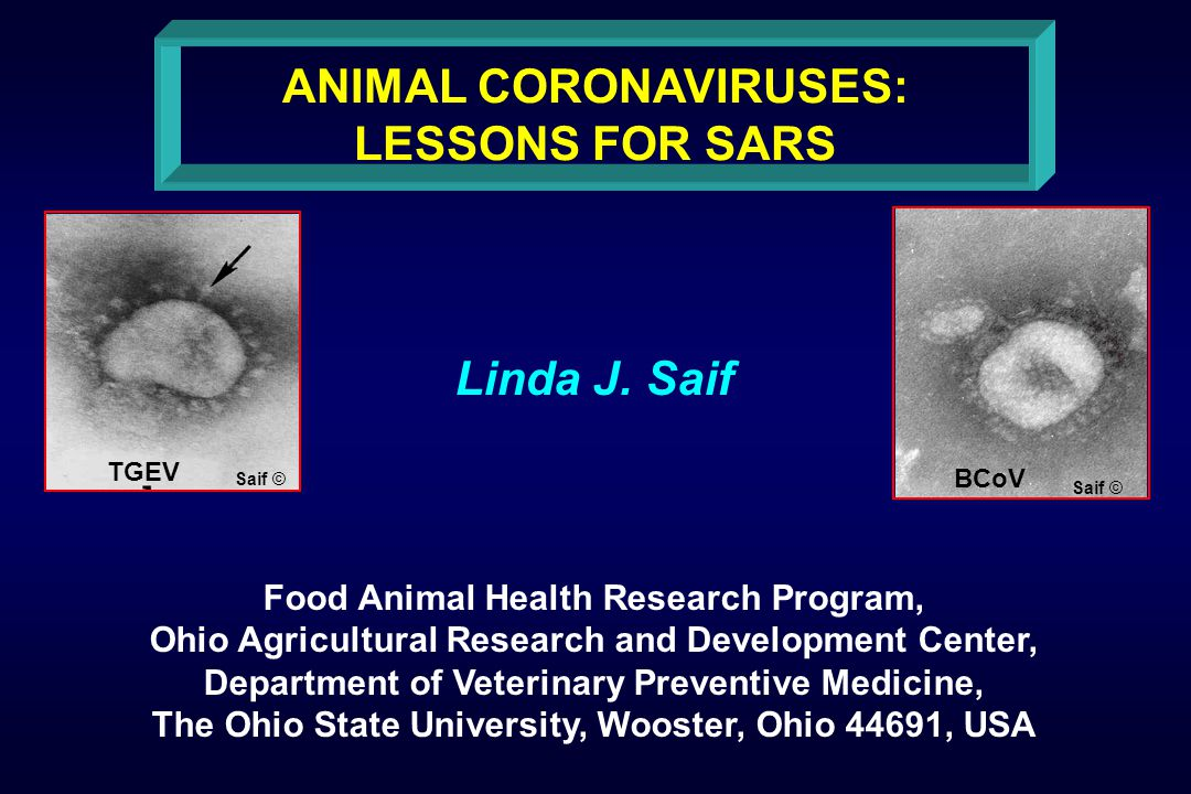 ANIMAL CORONAVIRUSES: LESSONS FOR SARS Linda J.