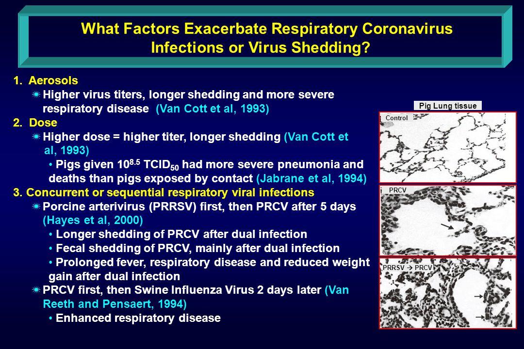 What Factors Exacerbate Respiratory Coronavirus Infections or Virus Shedding.