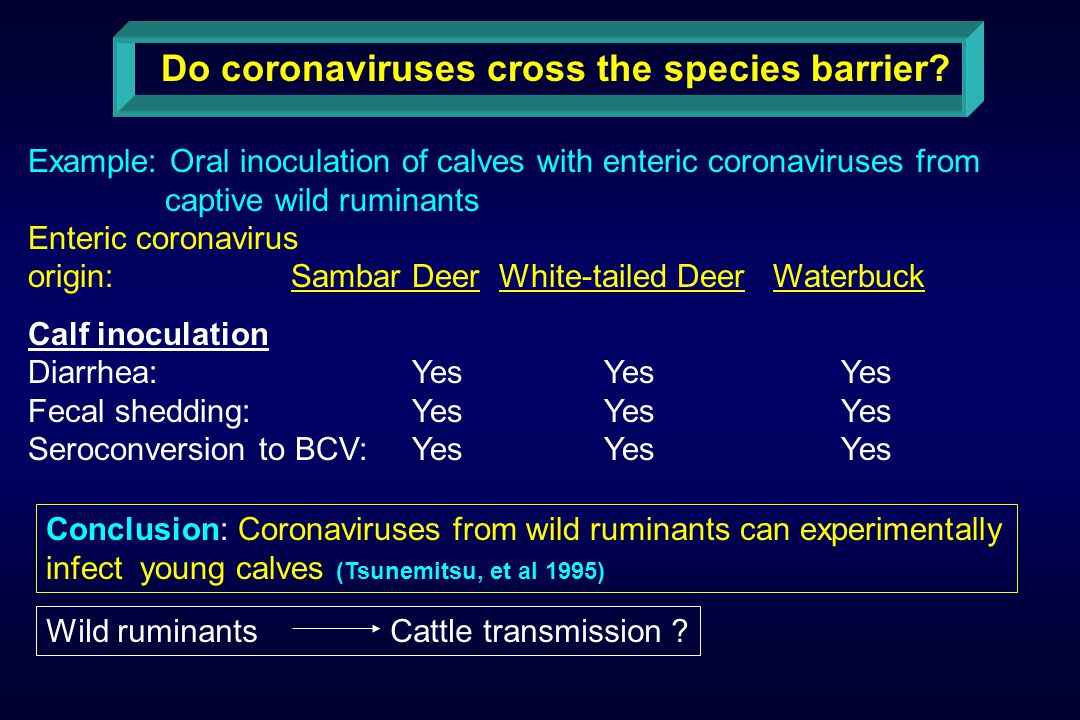 Do coronaviruses cross the species barrier.
