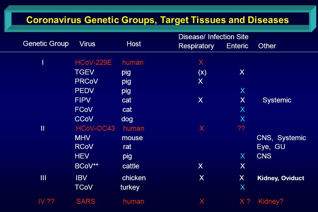 Coronavirus Genetic Groups, Target Tissues and Diseases Genetic Group VirusHost Disease/ Infection Site Respiratory Enteric Other I HCoV-229E human X TGEV pig (x) X PRCoV pig X PEDV pig X FIPV cat X X Systemic FCoV cat X CCoV dog X II HCoV-OC43 human X .
