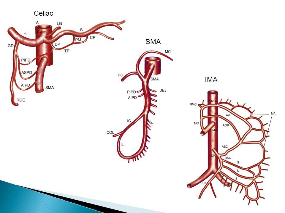 Celiac SMA IMA