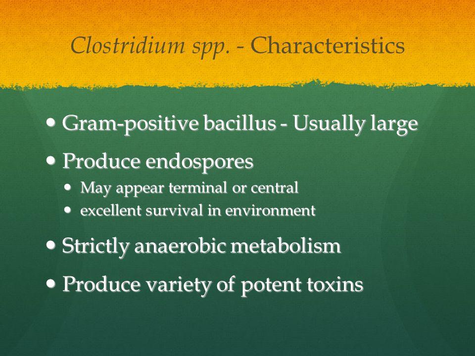 Clostridium spp. - Characteristics Gram-positive bacillus - Usually large Gram-positive bacillus - Usually large Produce endospores Produce endospores