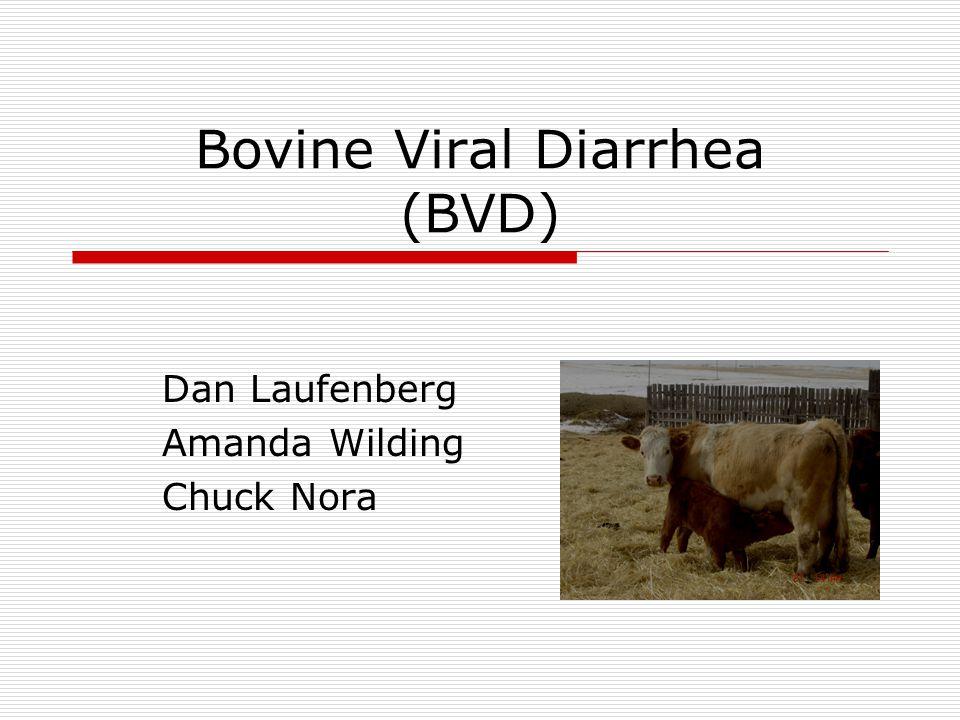 Bovine Viral Diarrhea (BVD) Dan Laufenberg Amanda Wilding Chuck Nora