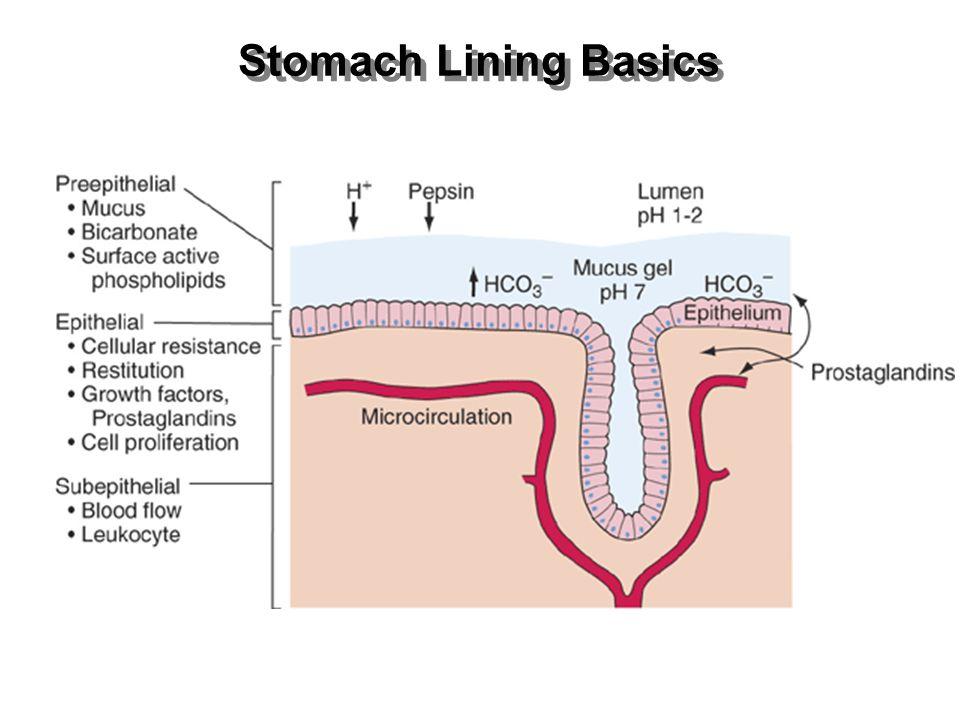 Stomach Lining Basics