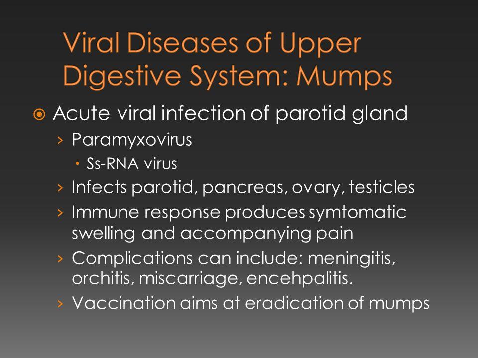  Acute viral infection of parotid gland › Paramyxovirus  Ss-RNA virus › Infects parotid, pancreas, ovary, testicles › Immune response produces symto