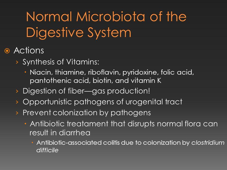  Actions › Synthesis of Vitamins:  Niacin, thiamine, riboflavin, pyridoxine, folic acid, pantothenic acid, biotin, and vitamin K › Digestion of fibe