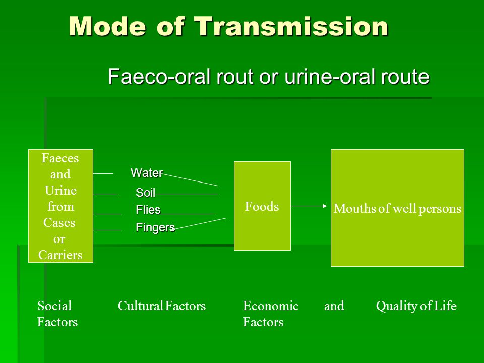 Mode of Transmission Mode of Transmission Faeco-oral rout or urine-oral route Faeco-oral rout or urine-oral route Water Water Soil Soil Flies Flies Fi
