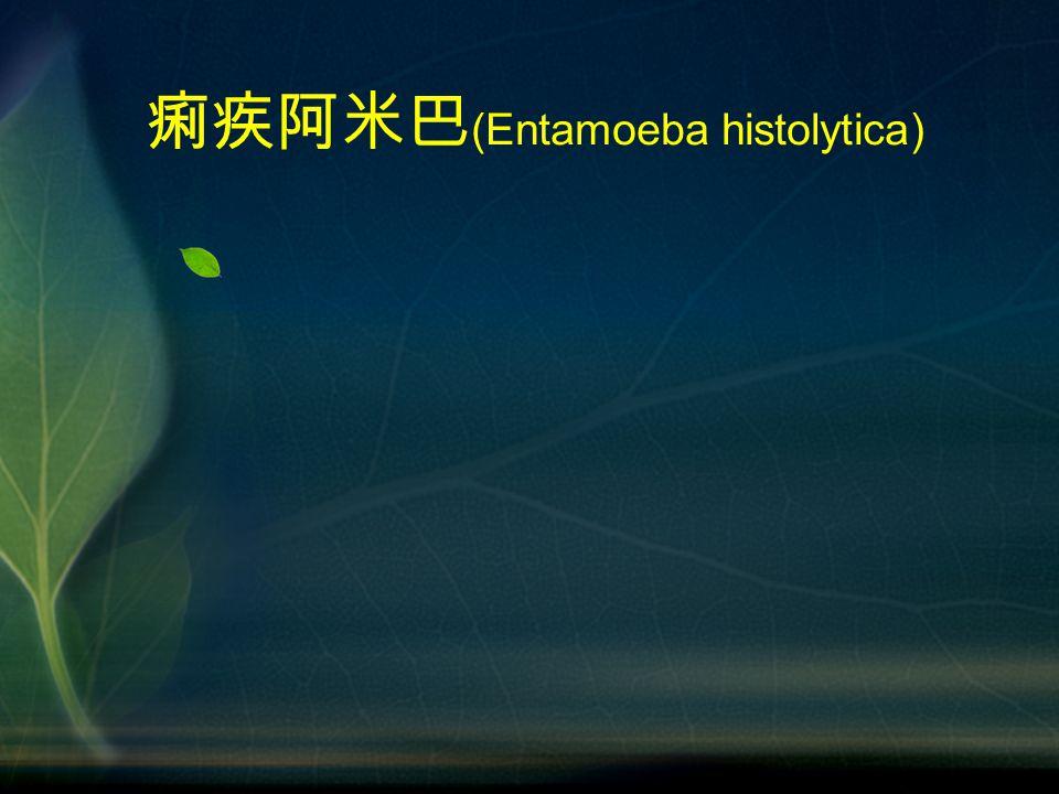 痢疾阿米巴 (Entamoeba histolytica)
