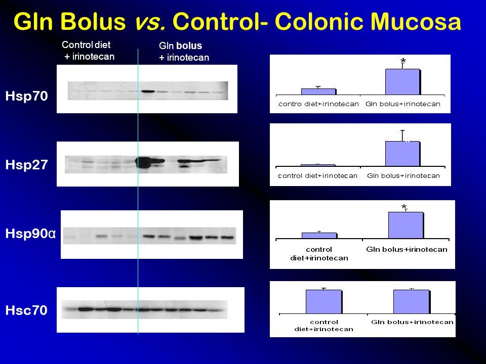 Gln Bolus vs. Control- Colonic Mucosa Control diet + irinotecan Gln bolus + irinotecan Hsp70 Hsp27 Hsp90 α Hsc70 * * * *