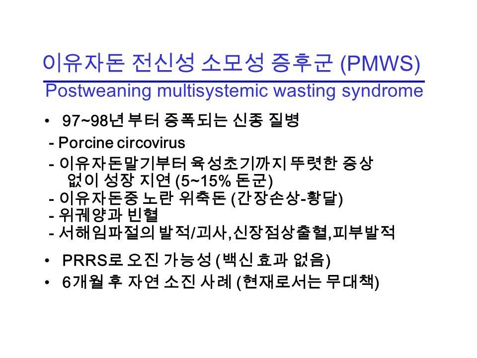 이유자돈 전신성 소모성 증후군 (PMWS) Postweaning multisystemic wasting syndrome 97~98 년 부터 증폭되는 신종 질병 - Porcine circovirus - 이유자돈말기부터 육성초기까지 뚜렷한 증상 없이 성장 지연 (5~15% 돈군 ) - 이유자돈중 노란 위축돈 ( 간장손상 - 황달 ) - 위궤양과 빈혈 - 서해임파절의 발적 / 괴사, 신장점상출혈, 피부발적 PRRS 로 오진 가능성 ( 백신 효과 없음 ) 6 개월 후 자연 소진 사례 ( 현재로서는 무대책 )