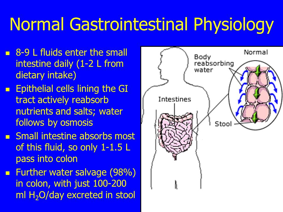 Normal Gastrointestinal Physiology 8-9 L fluids enter the small intestine daily (1-2 L from dietary intake) Epithelial cells lining the GI tract actively reabsorb nutrients and salts; water follows by osmosis Small intestine absorbs most of this fluid, so only 1-1.5 L pass into colon Further water salvage (98%) in colon, with just 100-200 ml H 2 O/day excreted in stool