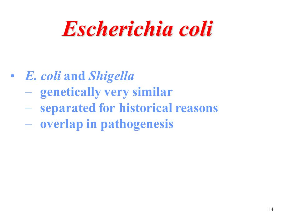 14 E. coli and Shigella –genetically very similar –separated for historical reasons –overlap in pathogenesis Escherichia coli