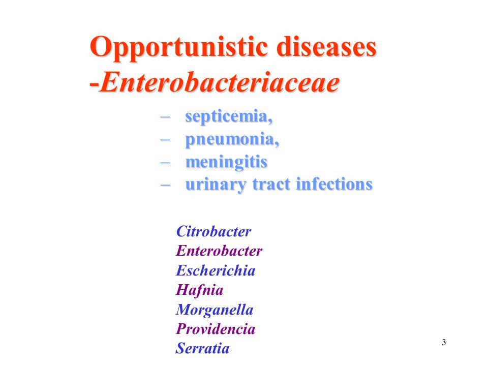 3 –septicemia, –pneumonia, –meningitis –urinary tract infections Citrobacter Enterobacter Escherichia Hafnia Morganella Providencia Serratia Opportuni