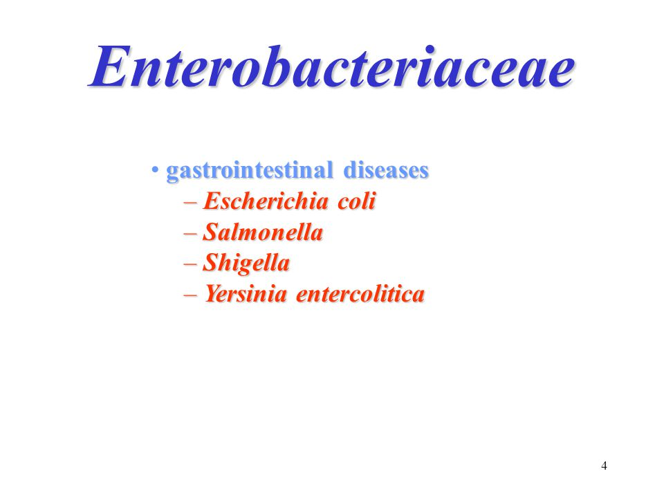 4 Enterobacteriaceae gastrointestinal diseases – Escherichia coli – Salmonella – Shigella – Yersinia entercolitica